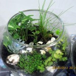 A terrarium using five different varieties of plants..